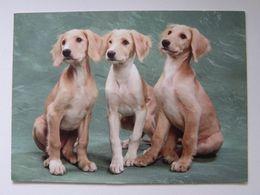 Dog  Chien  Hund /  York - Cani