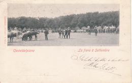 133 CASTELDELPIANO - FIERA MERCATO 8 SETTEMBRE - ANIMATA CON ANIMALI - VIAGGIATA 1905 - FORMATO PICCOLO - Italia