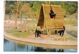 83 - FRÉJUS - Parc Zoologique De Fréjus - L'Ile Aux Singes - Atèles (D5) - Singes