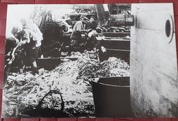 Carte Photo  Oeuvres De Mer - Travail De La Morue Sur Le MARIE-MARGUERITE De Fécamp -(1903-1914)  ! - Fécamp
