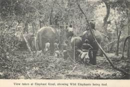 Sri Lanka - Ceylon - View Taken At Elephant Kraal Showing Wild Elephant   ( Sans Feuille Du Verso - Without Back Sheet ) - Sri Lanka (Ceylon)