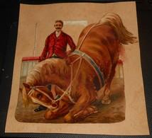 Découpi  XIXe. Un Cheval Dans Un Cirque Avec Son Cavalier. - Animaux