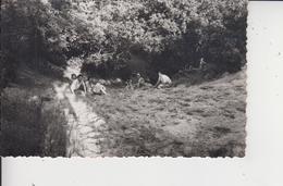 77 VILLEMARECHAL  -  CARTE PHOTO  - - Andere Gemeenten