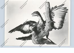 PRÄHISTORISCHE TIERE - Archaeopteryx - Autres