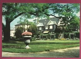 57.Montigny-les-Metz. Vasque De Fleurs Et Arbre Centenaire. 1985 - Otros Municipios