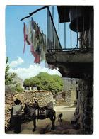 Corse Du Sud Un Coin Pittoresque âne Chien Linge Au Balcon VOIR DOS Postée De Monaccia D'Aullene Vers Sartène En 1971 - Sartene