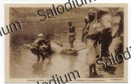 SOMALIA Italiana - CACCIA IPPOPOTAMO HIPPOPOTAMUS - Colonie Regno D'Italia - Africa - Somalie