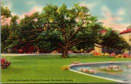Georgia Savannah Old Oak In Candler Hospital Grounds - Savannah