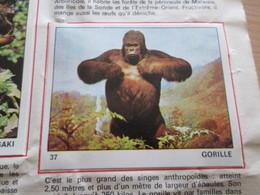 Complétez Votre Album / TOUS LES ANIMAUX Jeunesse-Collections / Image 37 GORILLE (de Récupération) - Panini