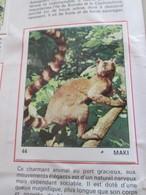 Complétez Votre Album / TOUS LES ANIMAUX Jeunesse-Collections / Image 44 MAKI (de Récupération) - Panini