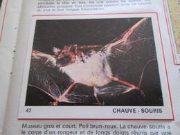Complétez Votre Album / TOUS LES ANIMAUX Jeunesse-Collections / Image 47 CHAUVE-SOURIS (de Récupération) - Panini