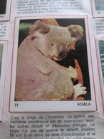 Complétez Votre Album / TOUS LES ANIMAUX Jeunesse-Collections / Image 51 KOALA (de Récupération) - Panini