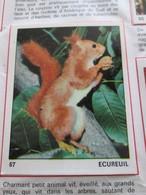Complétez Votre Album / TOUS LES ANIMAUX Jeunesse-Collections / Image 67 ECUREUIL (de Récupération) - Panini