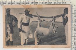 CACCIA HUNTING AFRICA ORIENTALE CACCIA ALLA GAZZELLA  SOMALIA 1936 - Hunting