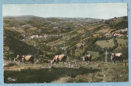 F0563  CP  SAINT-CHELY-d'AUBRAC  (Aveyron)  St-Chély Vu Des Cambrassats - Bovins  +++++ - Autres Communes