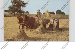 USA - PENNSYLVANIA - LANCASTER, Amish Country, Golden Harvest Time - Lancaster