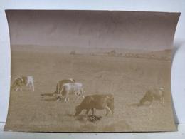 Ardennes. Sedan. Prairie Et Wadelincourt. 9x6cm - Photos