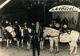 Cirkus Alberti - Other