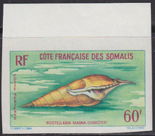 SOMALI COAST (1962) Rostellaria Magna. Imperforate. Scott No C28, Yvert No PA31. - Unclassified