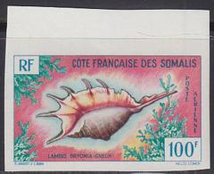 SOMALI COAST (1962) Lambis Bryonia. Imperforate. Scott No C29, Yvert No PA32. - Unclassified
