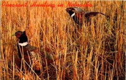 Nebraska Pheasant Hunting - Autres
