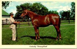 Kentucky Lexington Yearling Thoroughbred Ready For Sale Keeneland Race Course - Lexington