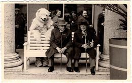 Carte Photo Originale Eisbär & Déguisement D'Ours Blanc Polaire Posant Avec Deux Vieux Sur Un Banc En 1938 Bad Wildungen - Anonieme Personen