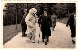 Carte Photo Originale Eisbär & Déguisement D'Ours Blanc Polaire Marchant Avec Deux Vieux Au Parc En 1938 Bad Wildungen - Anonieme Personen