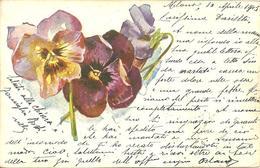 "Cartolina Con Fiori, ""Primule"", Carte Postale Avec Fleurs ""Primevères"" - Fiori"
