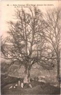 CPA 02 (Aisne) Guise - Arbre Historique De La Vierge, Plusieurs Fois Séculaire, Au Fort De Guise TBE 1906 - Guise