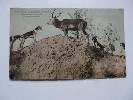 CPA 28 EURE ET LOIR : Forêt De SENONCHES - Une Chasse à Courre - France