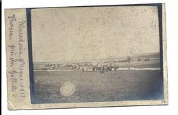 GRADOBOR ( Pentalofos ) Environs - Macedonia - War 1917 - Old Photocard Troupeau Près Du Gallilio - PHOTOCARD - Macedonia