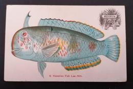 Hawaiian Fish Lae -Nihi.Etat Neuve.Aquarium. - Fish & Shellfish