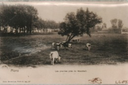 MONS Les Prairies Pres Du Wauxhall - Mons