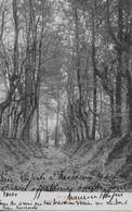 PUERS / PUURS - 1914 - Pollepeldreef - Allée - *573* - Puurs