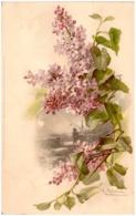 C. KLEIN - Fleurs - Lilas - Klein, Catharina