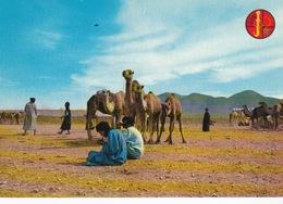 Mauritanie/ Maroc/Sahara Occidental,Hommes Bleus, Marché Aux Chameaux, Goulimine. - Mauritanie