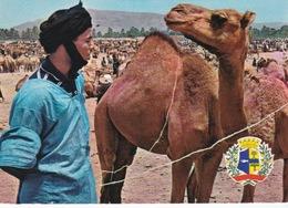 Mauritanie/ Maroc/Sahara Occidental,souk Des Chameaux à Goulimine. - Mauritania