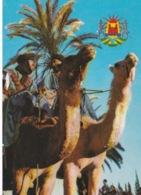 Mauritanie/ Maroc/Sahara Occidental,oasis. - Mauritania