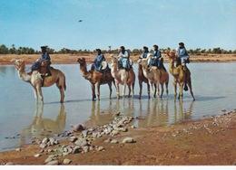 Mauritanie/ Maroc/Sahara Occidental, Méharistes.Hommes Bleus. - Mauritania