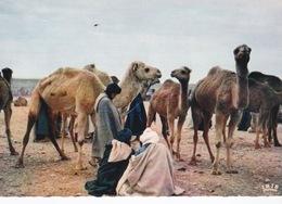 Mauritanie/ Maroc/Sahara Occidental, Souk Aux Chameaux.Hommes Bleus. - Mauritanie