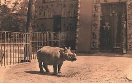 Belgique Anvers Antwerpen Rhinoceros D' Inde Zoo Jardin Zoologique Dierentuin Cachet 1926 - Antwerpen