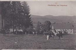 Oberhütten Am Lingekopf Orbey Linge - Orbey