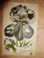 92 HAUTS DE SEINE/ De  SURESNES Recevez Cette Fleur  (iris) - Suresnes