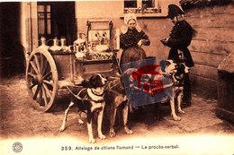 Attelage De Chiens Flamand - Le Procès-verbal - Street Merchants