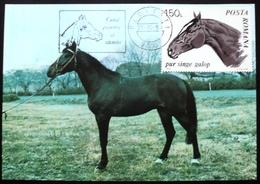 Romania 1983 Maxi-card Maximum-carte Postmark Flamme Cheval Pferd Caballo Horse Racing  Turf - Maximumkarten (MC)