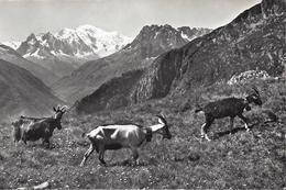 Finhaut - Col De La Gueula - VS Valais