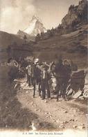 Zermatt - Le Cervin - Mulets - VS Valais
