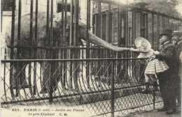 PARIS  Jardin Des Plantes Le Gros Elephant  Animée Zoo  RV - Parcs, Jardins