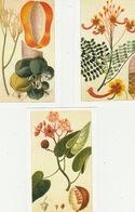 20 / 5 / 172  -  ROCOUÏER, PAPYER  &  POINCILLADE   3. C. P. M. - Heilpflanzen